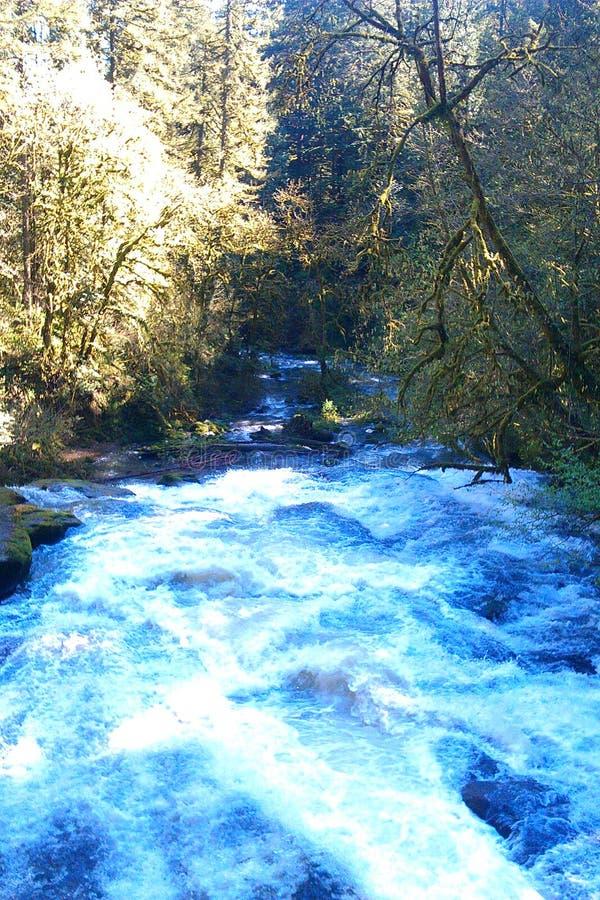 rzeka washougal zdjęcia royalty free