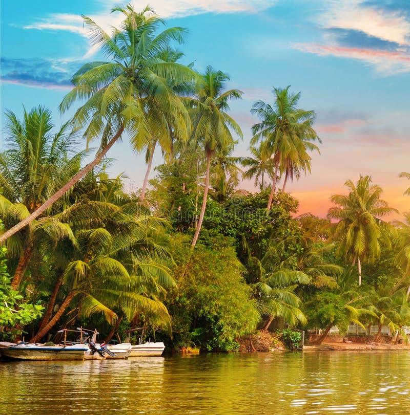 Rzeka, wschód słońca i tropikalne palmy, zdjęcie royalty free