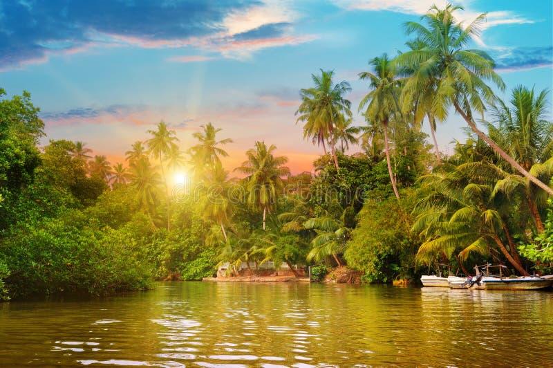 Rzeka, wschód słońca i tropikalne palmy, zdjęcia royalty free