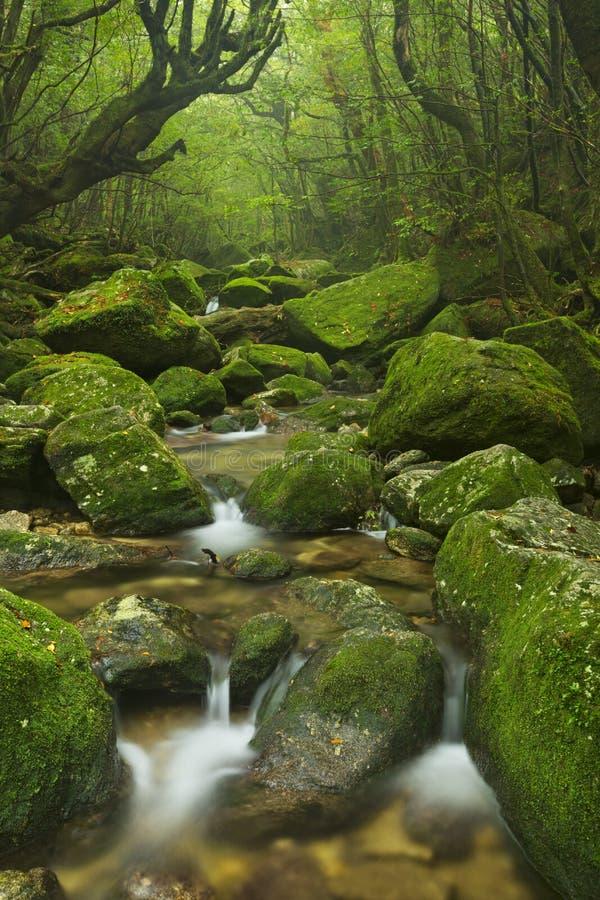 Rzeka wzdłuż Shiratani Unsuikyo śladu na Yakushima, Japonia obrazy stock