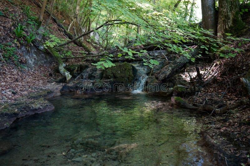 Rzeka z małym wodnym spadkiem w lesie fotografia royalty free