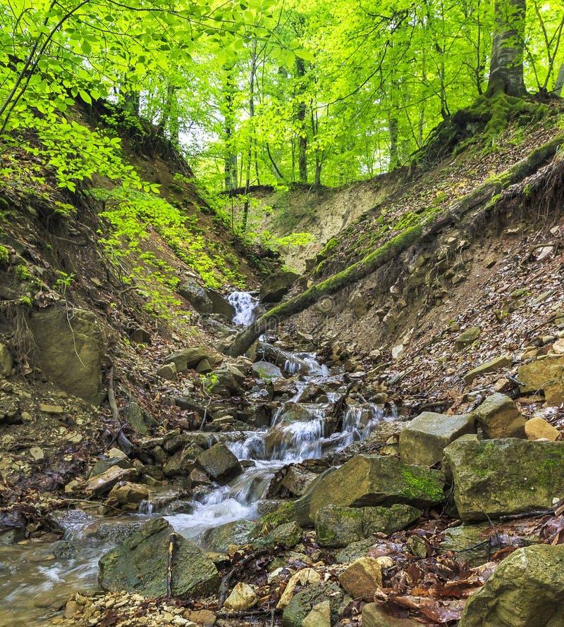 Rzeka z topi wodę w forestAzerbaijan zdjęcia stock