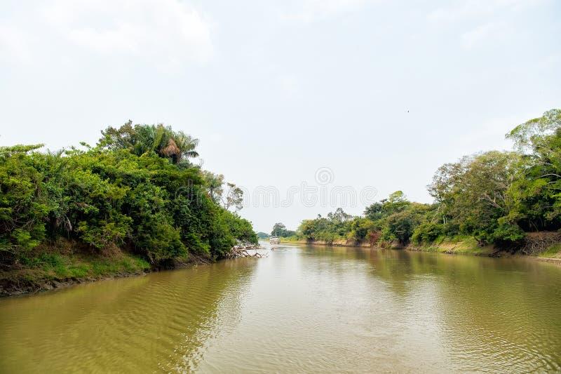 Rzeka z zielonymi drzewami na bankach w Santarem, Brazylia fotografia royalty free