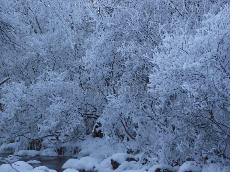 Rzeka, zima, Syberia zdjęcia stock