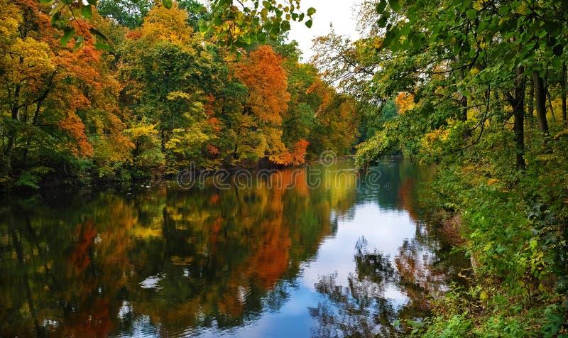 Rzeki i lasu krajobraz w jesieni obraz royalty free