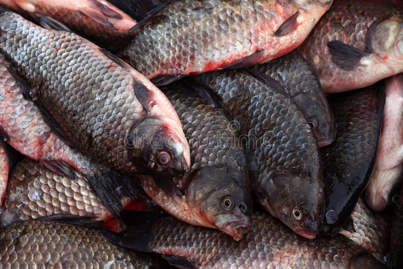 Download Rzeki rybia płoć zdjęcie stock. Obraz złożonej z ryba - 53776448
