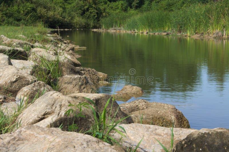 Rzeki skały kamienia wody trawy lasu natura zdjęcie stock