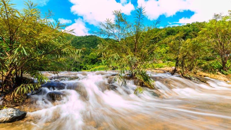 Rzeki w dużych lasach są obfite obraz stock