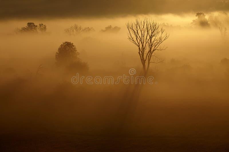 Rzeki zamglony del dolinie del krajobraz w di Poranny fotografia stock libera da diritti