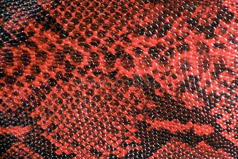rzemienna skóry węża tekstura zdjęcia royalty free