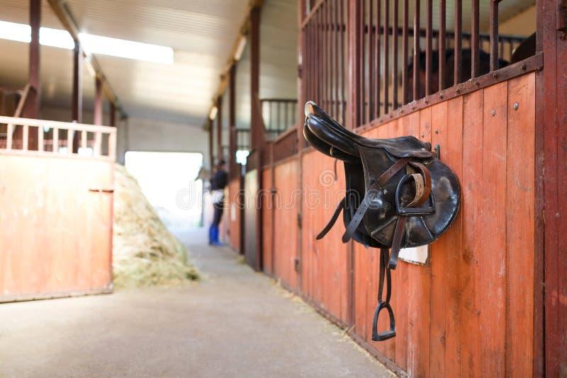 Rzemienny comberu koń obrazy stock