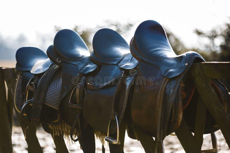 Rzemienny siodłowy koń zdjęcia stock