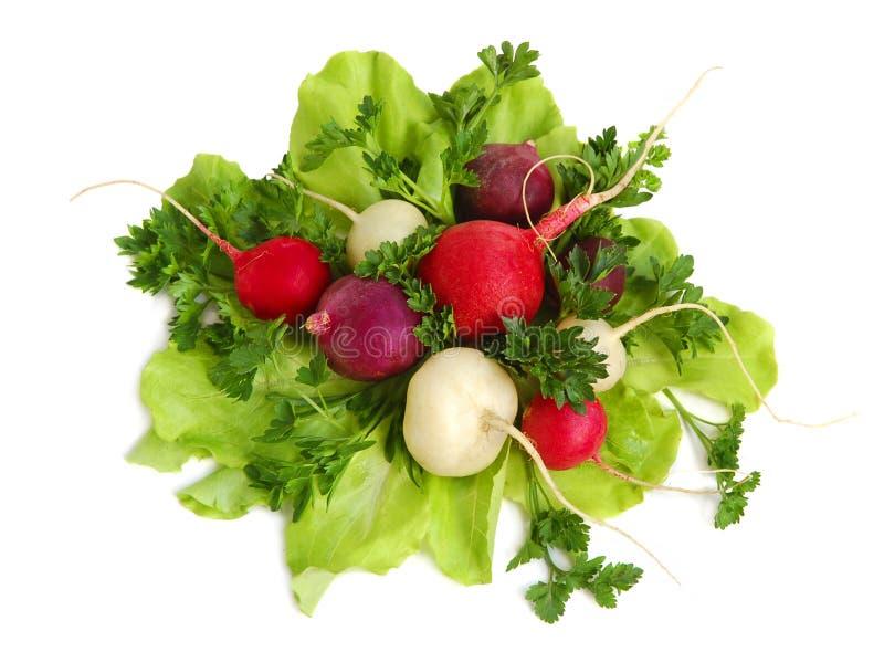 rzodkiew smakowita świeżej zielone obrazy royalty free