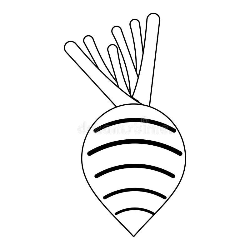 Rzodkwi jarzynowa świeża żywność w czarny i biały ilustracja wektor