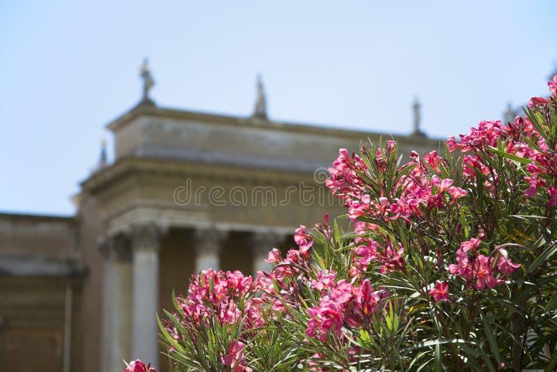 Rzym, forum romanum fotografia stock