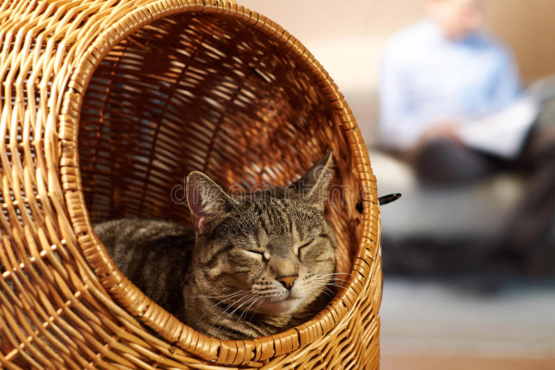 Sábado calmo em casa com gato foto de stock