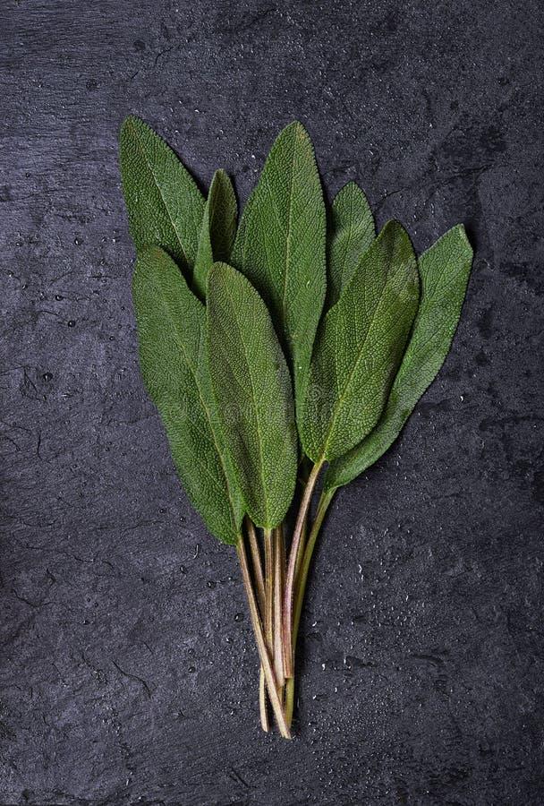 Sábio verde fresco fotos de stock