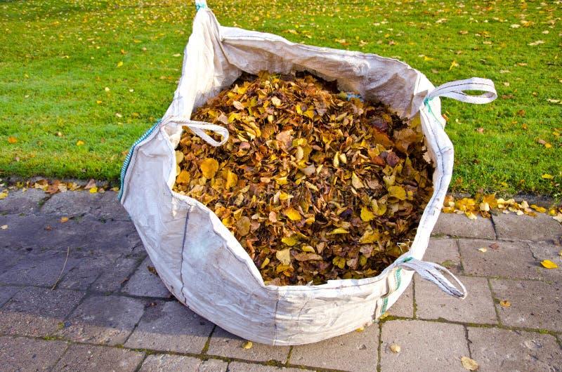 Säcken med den torra hösten lämnar i stad parkerar arkivfoton