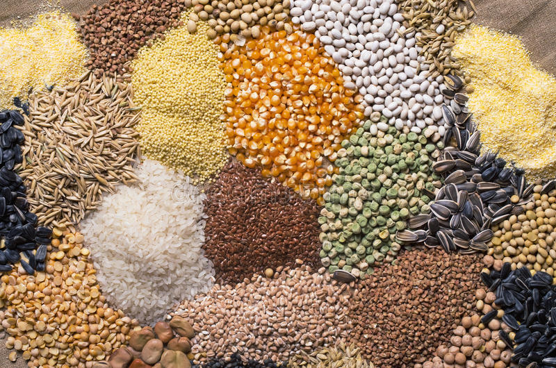 Sädes- korn, frö, bönor arkivbild