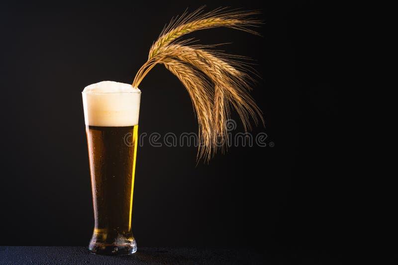 Sädes- korn i exponeringsglas som är fullt av öl med skum Svart bakgrundskopieringsutrymme arkivfoton