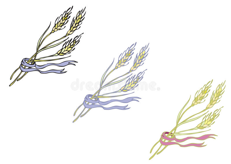 Sädes- mogna spikelets royaltyfri foto