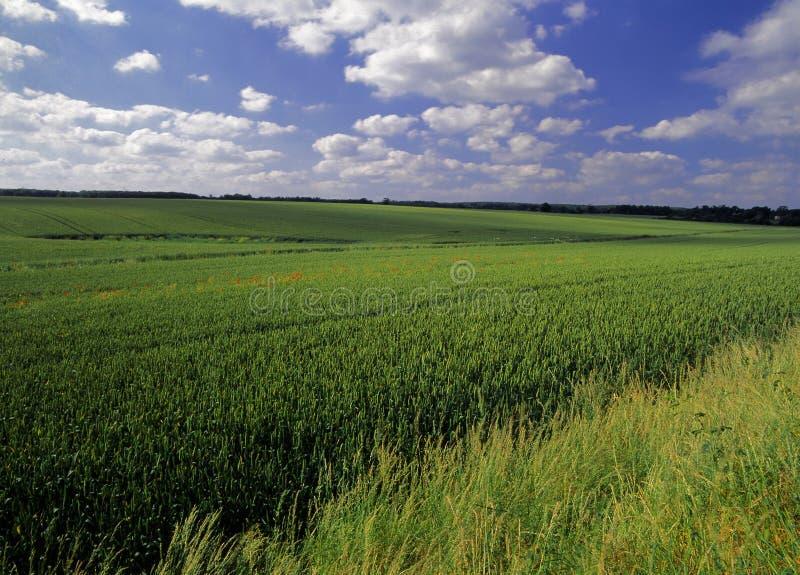 sädesslag kantjusterar jordbruksmark arkivfoto