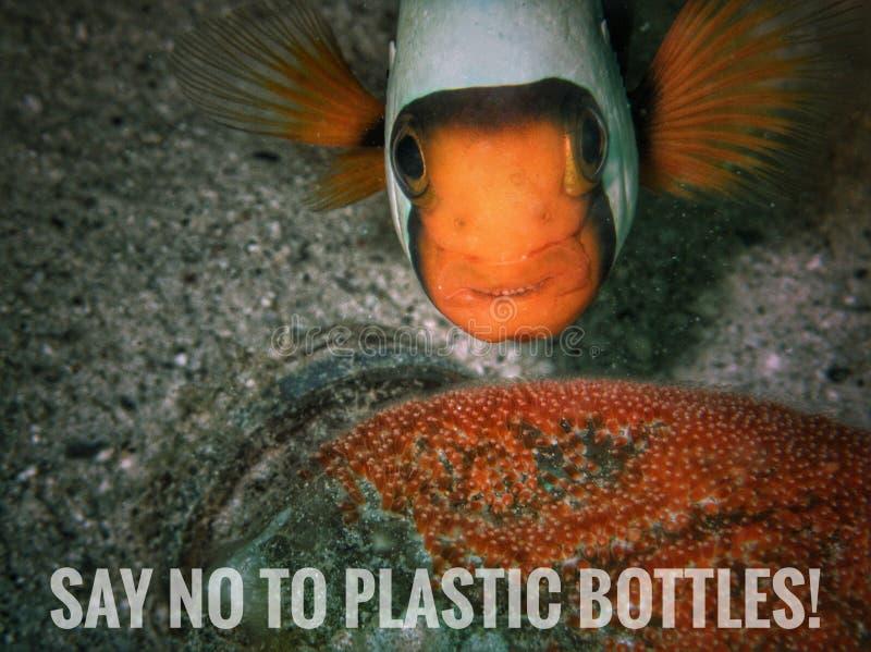 Säg inte till plast- flaskor! arkivbilder