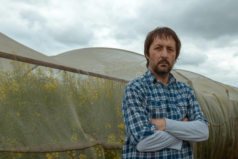 Säker bonde som poserar i rapsfrölantbrukfält royaltyfria bilder