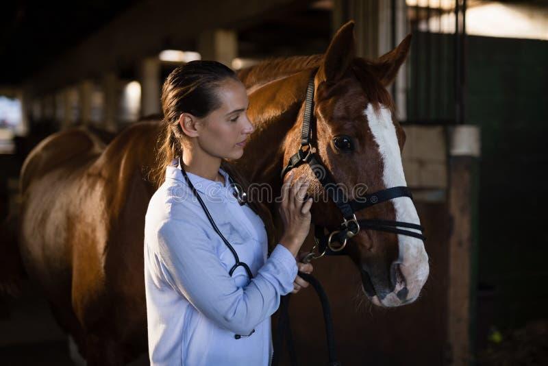 Säker kvinnlig veterinär som slår hästen arkivbilder