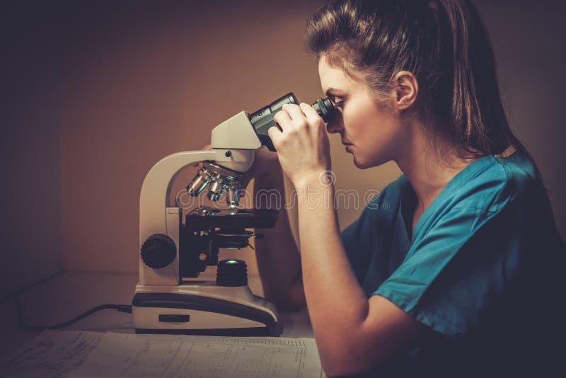 Säker veterinär som undersöker provet under mikroskopet i veterinär- klinik arkivfoto