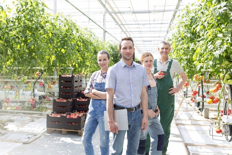 Säkra bönder som står med arbetsledaren mot tomatodling i växthus arkivbild