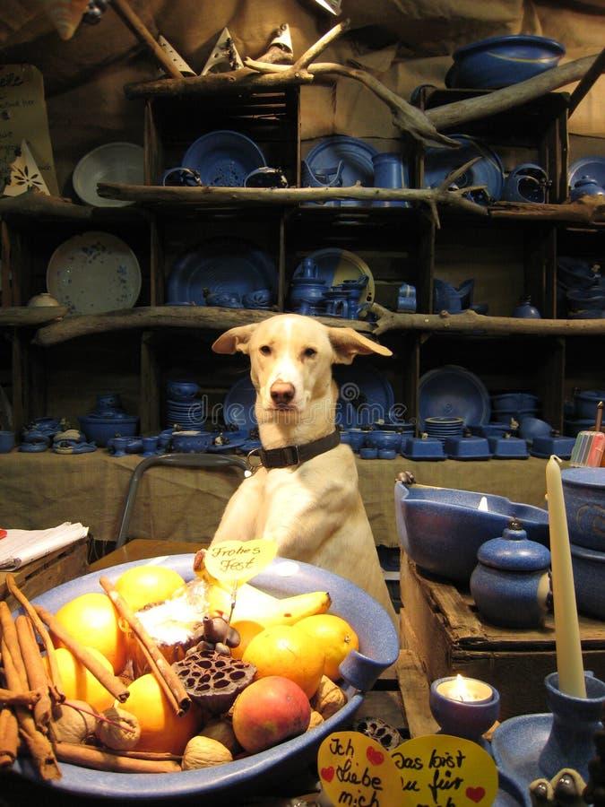 sälja för hund royaltyfri foto