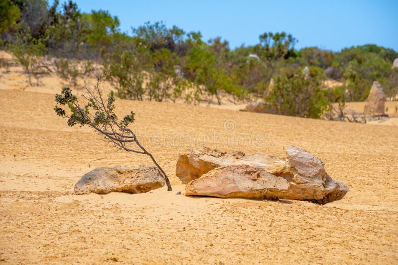 Sällsynt vegetation i öknen av västra Australien på höjdpunkterna arkivbild