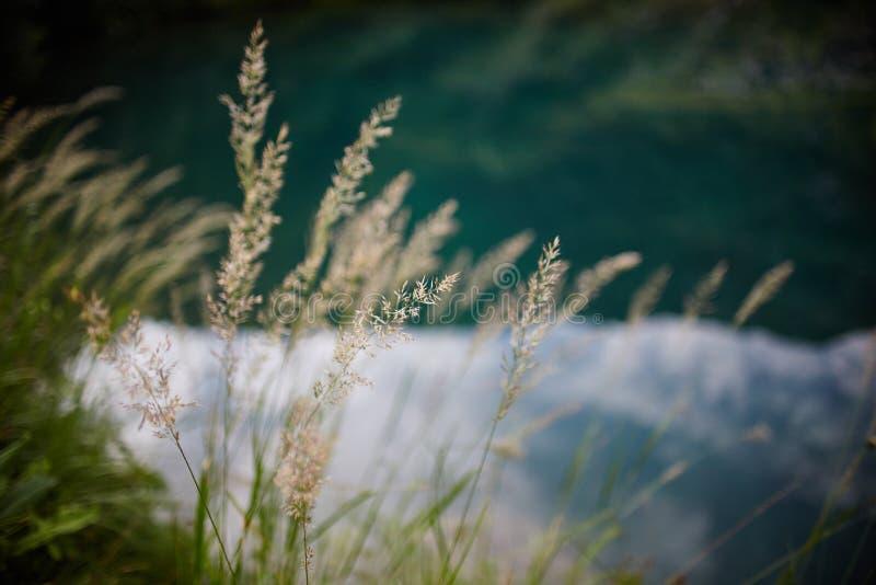 Sällsynta bergblommor och växter som växer på lutningen av de Kaukasus bergen, solig gryning Små härliga lösa blommor växer arkivfoto