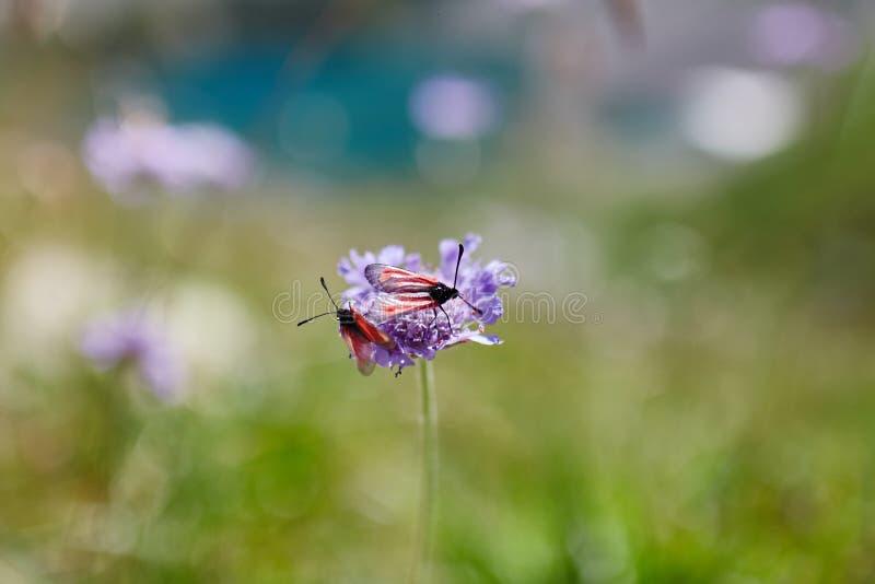 Sällsynta bergblommor och växter som växer på lutningen av de Kaukasus bergen, solig gryning Små härliga lösa blommor växer arkivbild