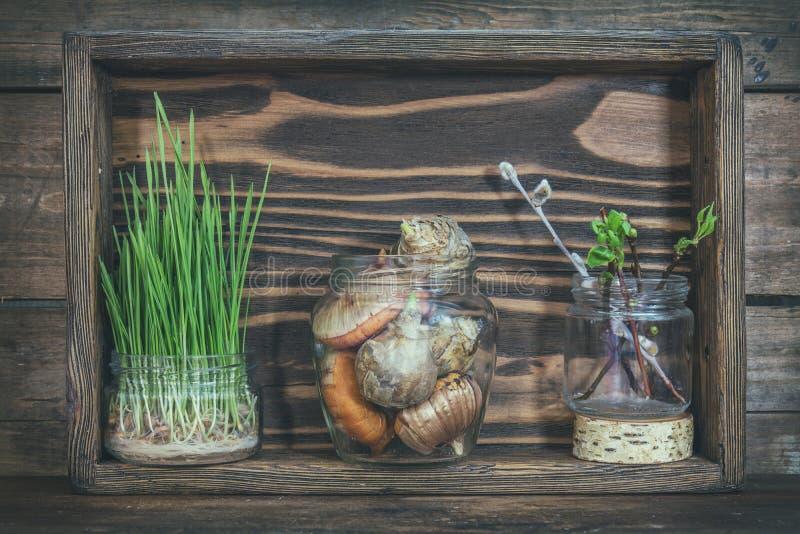 Sämlinge, Gartenwerkzeuge und Birnen in der Holzkiste stockbilder