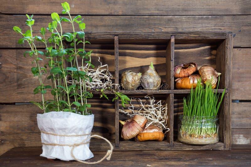 Sämlinge, Gartenwerkzeuge und Birnen in der Holzkiste lizenzfreies stockfoto