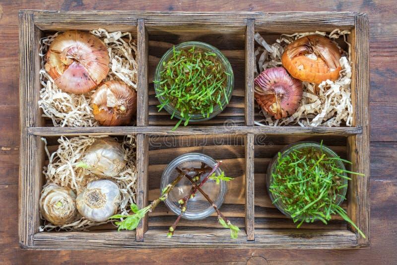 Sämlinge, Gartenwerkzeuge und Birnen in der Holzkiste lizenzfreie stockfotografie