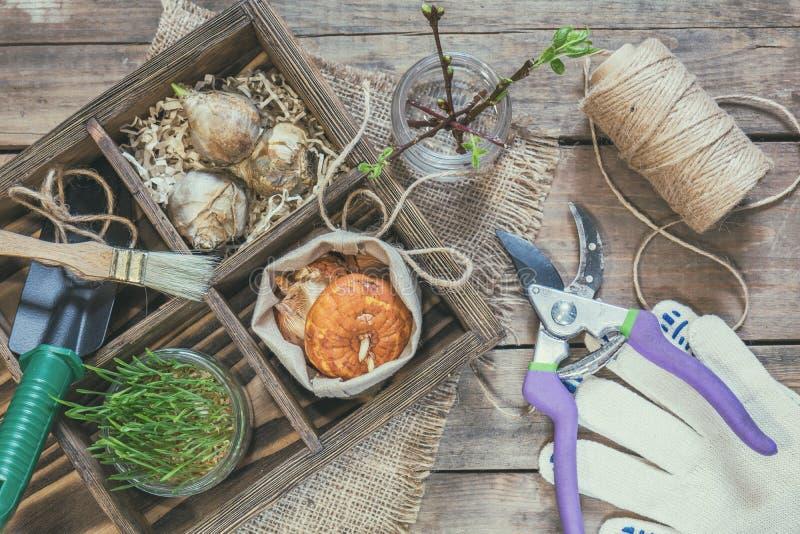 Sämlinge, Gartenwerkzeuge und Birnen in der Holzkiste stockbild
