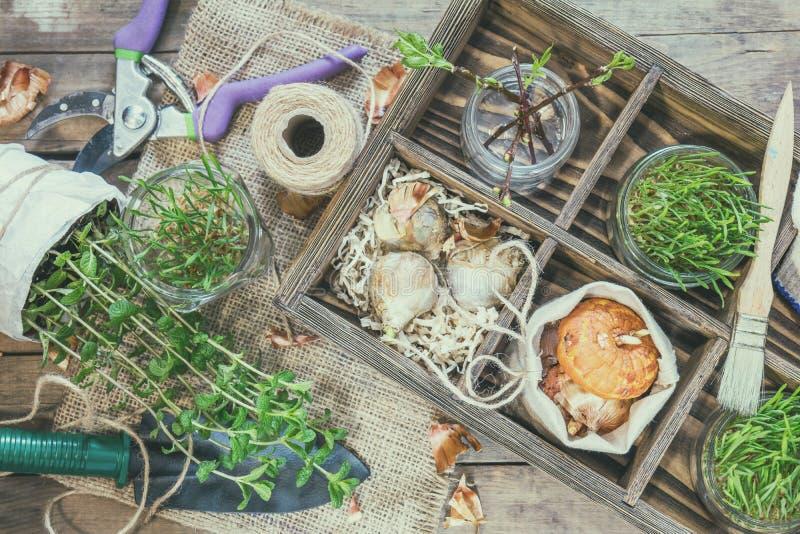 Sämlinge, Gartenwerkzeuge und Birnen in der Holzkiste lizenzfreie stockbilder