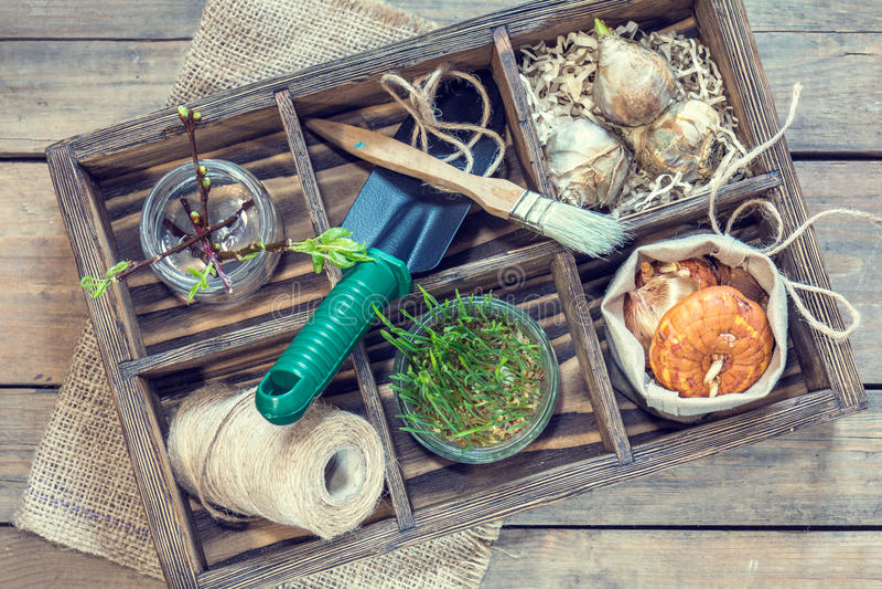 Sämlingsgartenwerkzeug-Birnengladiolehyazinthe lizenzfreie stockbilder