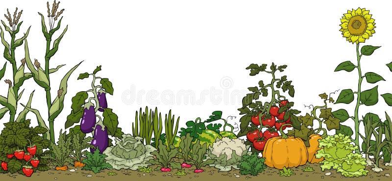 Säng för grönsakträdgård royaltyfri illustrationer