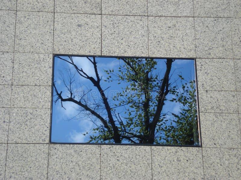 Särskilt glass fönster av kontorsbyggnad reflektera mitt emot träd royaltyfria foton
