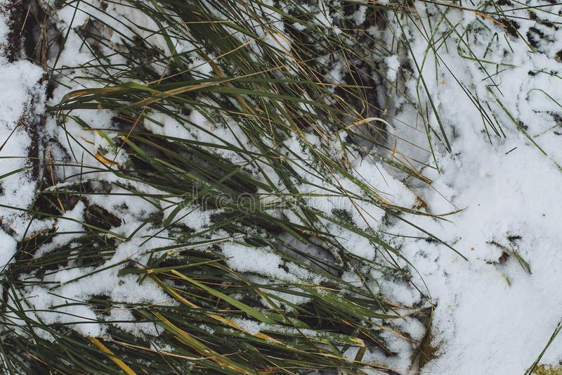 Säsonger för färger för gräsplan för frost för snögräsvintern specificerar vita djupfryst fotografering för bildbyråer