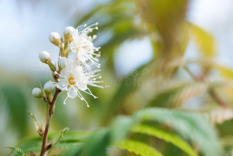 Säsongsbetonad bakgrund för abstrakt vår med vita blommor som är naturliga royaltyfria foton