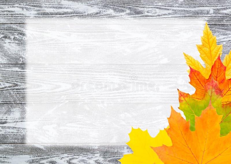 Download Säsongsbetonad Bakgrund För Höst Fotografering för Bildbyråer - Bild av lönn, november: 76700117