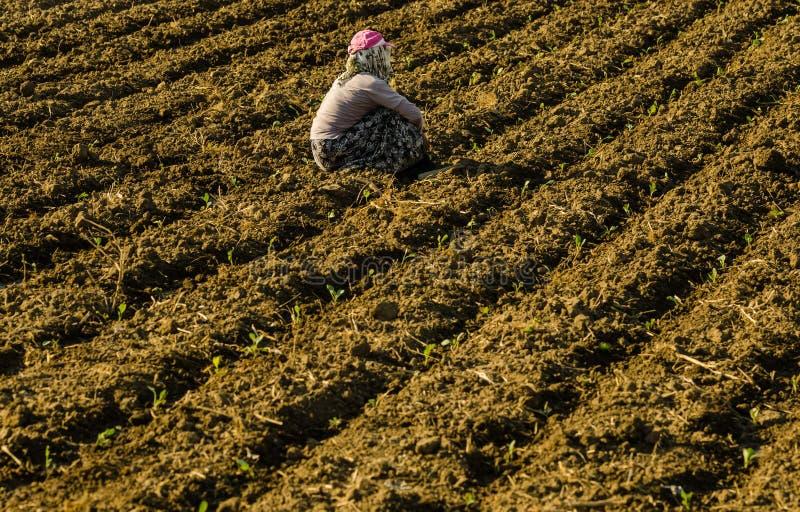 Säsongsbetonad kvinnaarbetare i jordbruksproduktionsektor i Anatolien royaltyfria foton