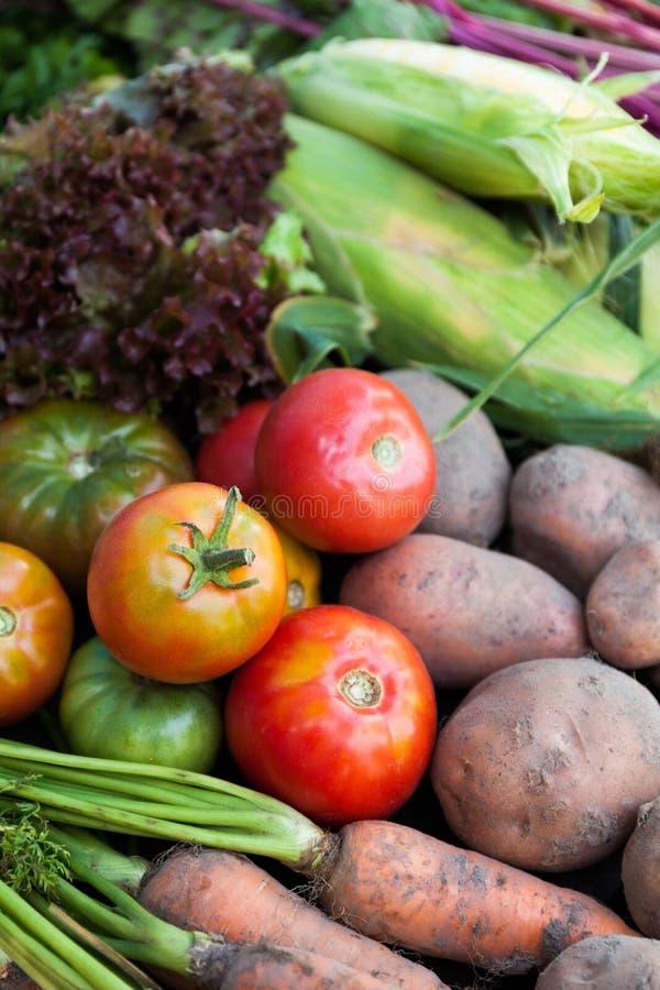 Säsongsbetonade grönsaker skörden, den nya hösten bantar mat Organisk detoxväxt arkivfoton