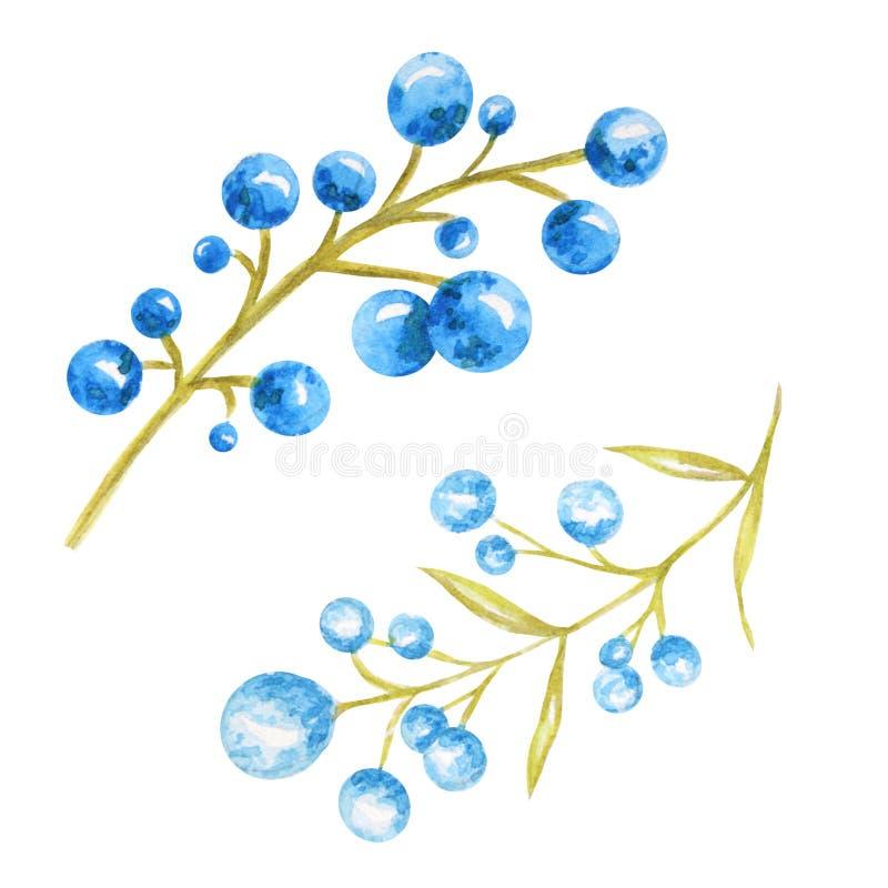 Säsongsbetonade höstbär, naturbär, höstligt botaniskt som isoleras på en vit bakgrund Hand för vattenfärghöstbeståndsdel stock illustrationer