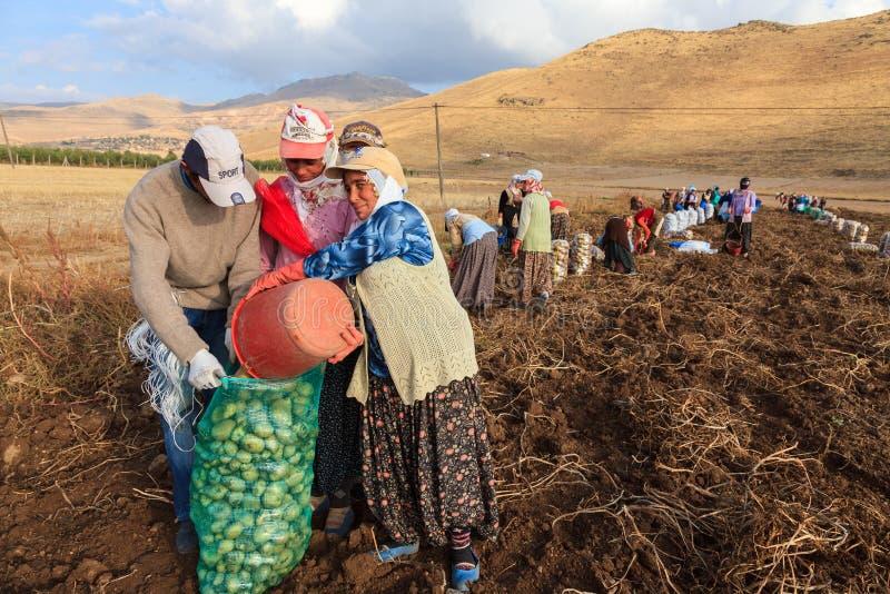 Säsongsbetonade kvinnaarbetare royaltyfria foton